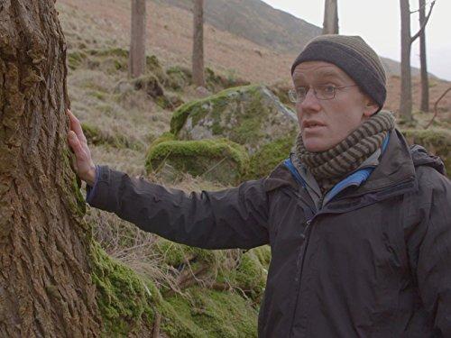 (Scots Pine)