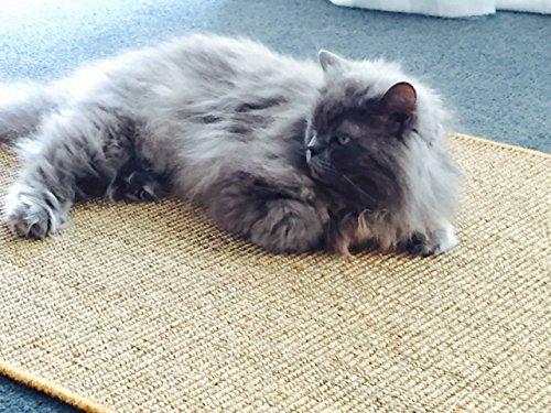 Premium Kratzmatte - Grau, 50x50cm ✓ 100% robuster Sisal ✓ Rutschhemmend ✓ Antistatisch | Katzen-Teppich, Katzen-Matte zum Wetzen der Krallen | Kratzteppich, Katzenkratzmatte geeignet für Fußbodenheizung | Sisalmatte, Sisalteppich für Wand & Boden