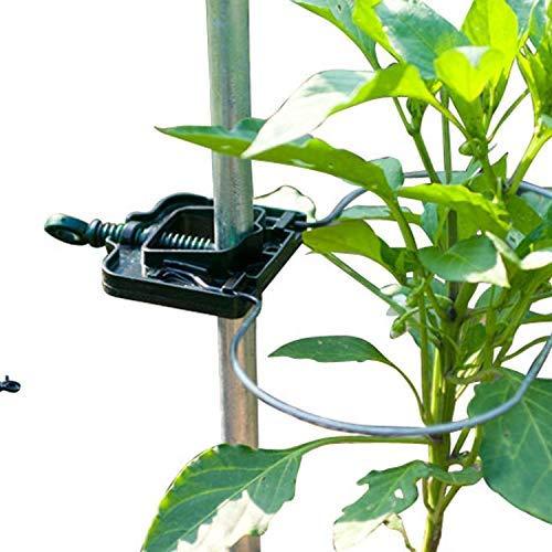 Bio Green Productos de Cultivo zarcillos, Plata: Amazon.es: Jardín