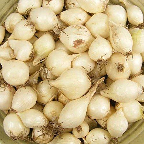 Glamaours 1/4 DE Libra: Conjuntos de Cebolla, de Gran Tamaã±o (Blanco) Bulbos Mã¡s Grandes Que el Blanco TãPico. (1/4...