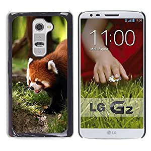 Paccase / SLIM PC / Aliminium Casa Carcasa Funda Case Cover para - Cute Red Panda - LG G2 D800 D802 D802TA D803 VS980 LS980
