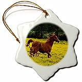 3dRose orn_80234_1 Arabian Mare and Foal Horses Snowflake Porcelain Ornament, 3-Inch