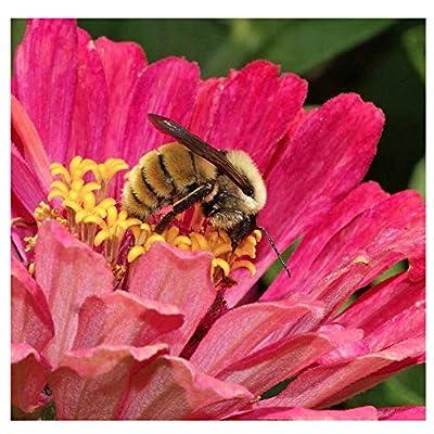 Bumblebee Banquet Seeds - This Wildflower Mix Attracts Bees and Pollinators : Garden & Outdoor