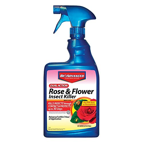 Bayer Advanced 502570 Dual Action Rose and Flower Insect Killer Ready-To-Use, 24-Ounce (Roses Green Spray)