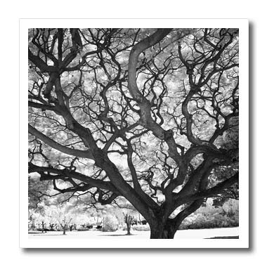 (3dRose Danita Delimont - Natural Patterns - USA, Hawaii, Oahu, Honolulu, Twisted Tree Limbs in Infrared. - 10x10 Iron on Heat Transfer for White Material (ht_314806_3))