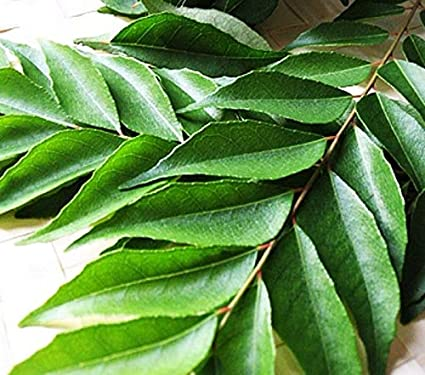 FRESH CURRY LEAVES (3 packs): Amazon co uk: Grocery