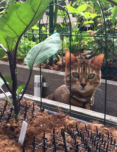 Cat Box Repellent Cat Scat Outdoor Garden Mat [tag]