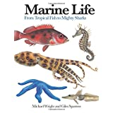Marine Life: From Tropical Fish to Mighty Sharks