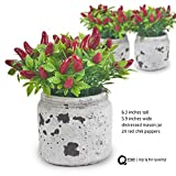 Q me Set of 3 Artificial Potted Chili