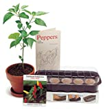 TABASCO Pepper Planting Kit