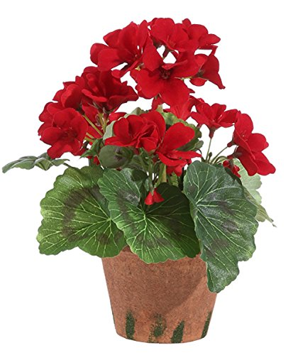 - 9 Inch High Potted Red Geranium In Pot