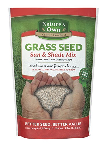 Mountain View Seeds Natures Own Sun & Shade Mix Grass Seed, 3-pounds (Best Grass Seed For Hard To Grow Areas)
