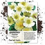 Seed Needs, Moonlight Nasturtium (Tropaeolum majus) 110 Seeds Non-GMO