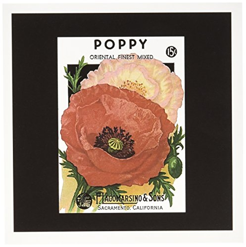 Price comparison product image 3dRose Set of 12 Greeting Cards, Poppy Oriental Finest with Red/Pink Flowers (gc_170711_2)