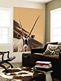 Close-Up of Oryx, Namib-Naukluft Park, Namibia, Africa Wall Mural by Wendy Kaveney 48 x 72in