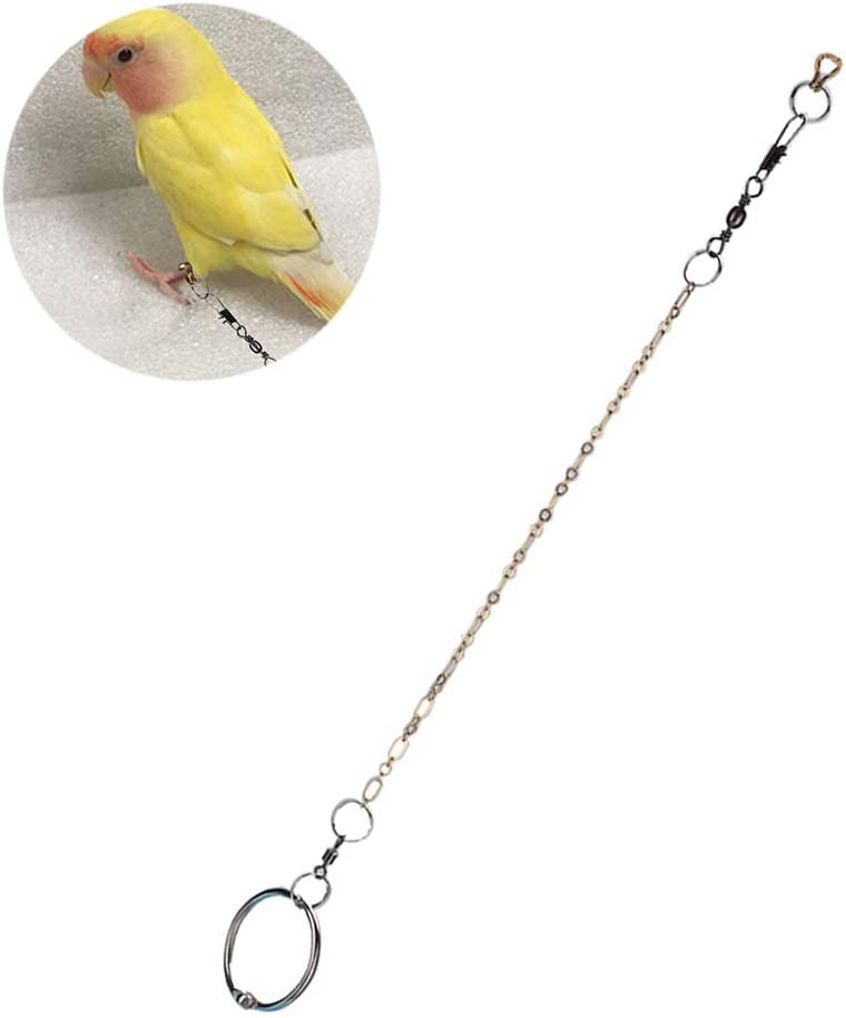 HEEPDD Pájaros Cadena de pie de Acero Inoxidable Loro Tobillera Cadena arnés de Entrenamiento para Diferentes Tipos y tamaños de Loros(Agapornis): Amazon.es: Productos para mascotas