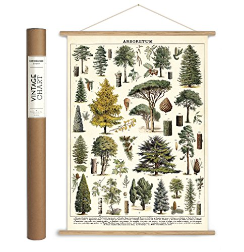 Cavallini Papers & Co. Cavallini Vintage Arboretum Hanging Poster Kit -