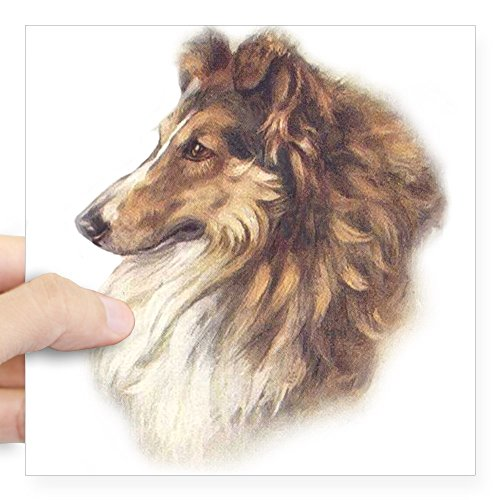CafePress - Collie4circle.Png Square Sticker 3