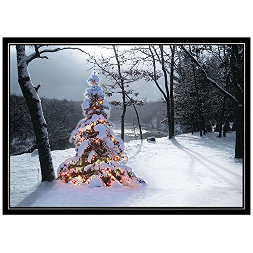 JAM Paper Blank Christmas Card Sets - Wilderness Tree Christmas Cards - 25 Cards & Envelopes per Pack (Pine Tree Border)