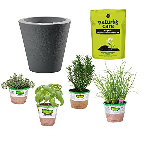 Good Bonnie Plants Bundle Project Beginner Herb Garden Kit, Caviar Black