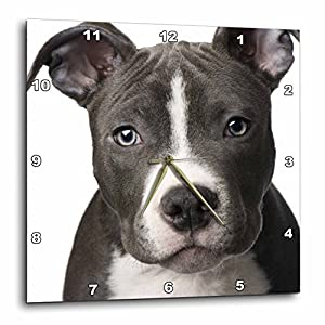 3dRose DPP_4240_3 American Pit Bull Terrier Puppy Wall Clock, 15 by 15-Inch 26