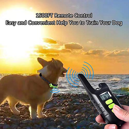 Buy dog shock training collar rechargeable