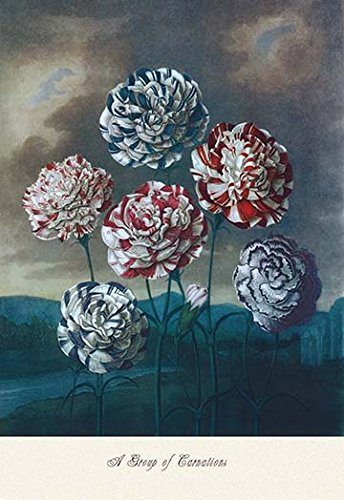 'A Group of Carnations' Giclee Fine Art Print - floral wall art decor
