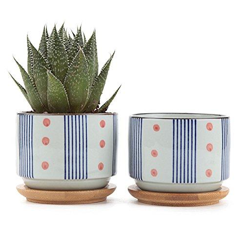T4U Ceramic Japanese succulent Container product image