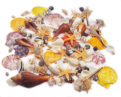 100PCS Sea Shells Mixed Ocean Beach Seashells-Natural Colorful Seashells Starfish Perfect for Vase Fillers,Wedding Decor Beach Theme Party , Home Decorations,DIY Crafts, Fish Tank,Candle Making (Wedding Favors Garden Theme)
