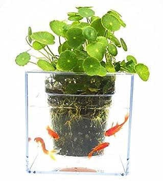 morebeauty Maceta de autorriego Fish Tank Tubo Transparente Macetero/maceta Acuario: Amazon.es: Jardín