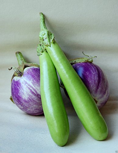 "Long Green Japanese eggplant Seeds - 200 seeds- Asian Vegetable. 12"" in length,"