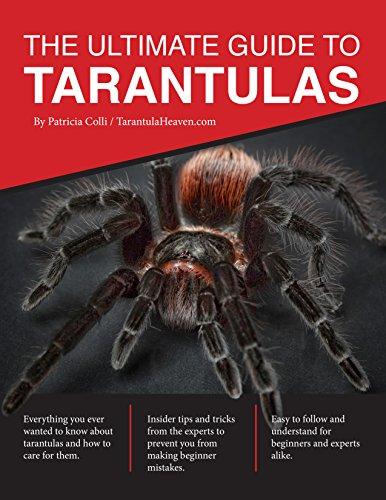 The Ultimate Guide To Tarantulas