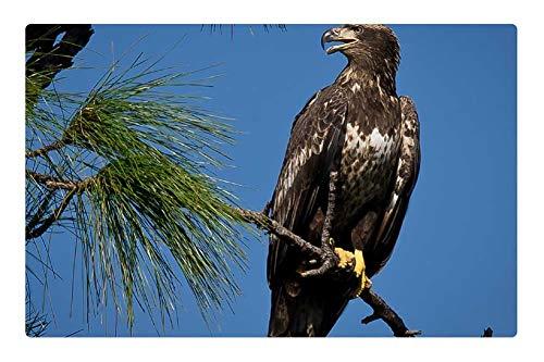 (Tree26 Indoor Floor Rug/Mat (23.6 x 15.7 Inch) - Bald Eagle Bird Juvenile Perched Nature)