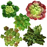 Artificial Succulent Plants Unpotted, Realistic Looking Variety Assortment (5 Pack Fake Succulents)