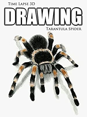 Clip: Time Lapse 3D Drawing: Tarantula Spider