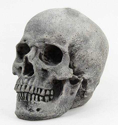 (Fleur de Lis Garden Ornaments LLC Skull Head Concrete Yard Sculpture Cement Figurine Cast Stone Halloween Skull Skeleton Sculpture)