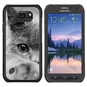 TECHCASE---Cubierta de la caja de protección para la piel dura ** Samsung Galaxy S6 Active G890A ** --British Shorthair siberiano del gato azul