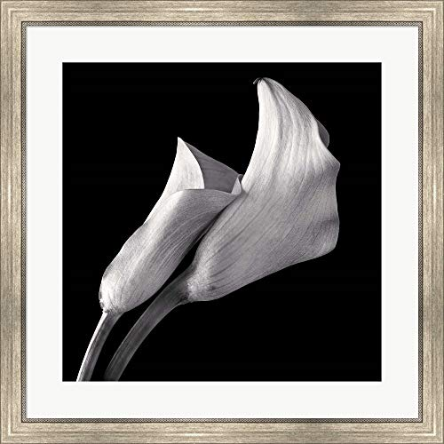 Calla Lilies by Michael Harrison Framed Art Print Wall Picture, Silver Scoop Frame, 30 x 30 inches ()