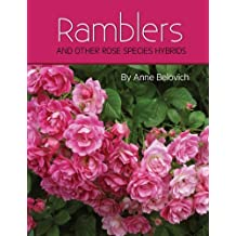 RAMBLERS And Other Rose Species Hybrids
