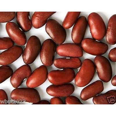 Kidney Bean, Large Dark Red, 200 Seeds, Non-gmo Heirloom Grown Organically : Garden & Outdoor