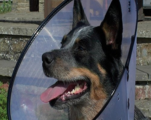 Company of Animals Hunde-Halskrause, Größe 4 (für 40-56cm Halsumfang)