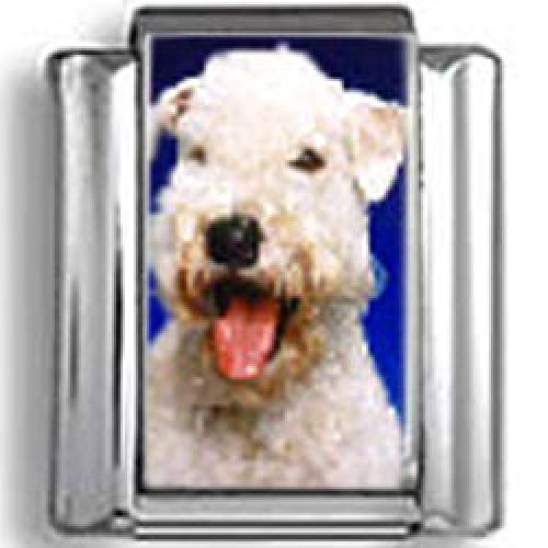 Wheaten Terrier Dog Photo Italian Charm