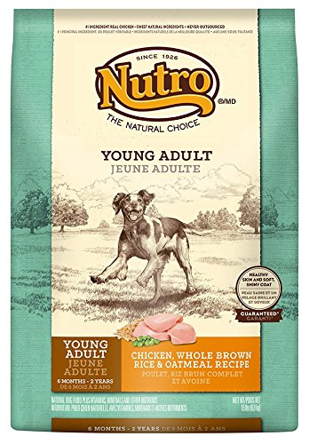 NUTRO Young Adult Dry Dog Food, Chicken, Brown Rice and Oatmeal, 15 lbs.