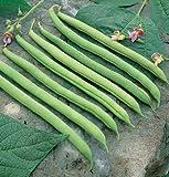 David's Garden Seeds Bean Bush Provider D010A (Green) 100 Organic Heirloom Seeds