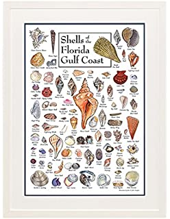 Shells of Floridas Gulf Coast Poster