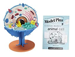 American Educational Products Model Plus SI69072 EVA Foam 3-D Science The Animal Cell Model