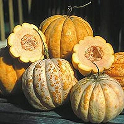 Delice de Table Cantaloupe Seed - French Heirloom Melon Seeds, (0.5gr to 10gr) 1 Gram : Garden & Outdoor