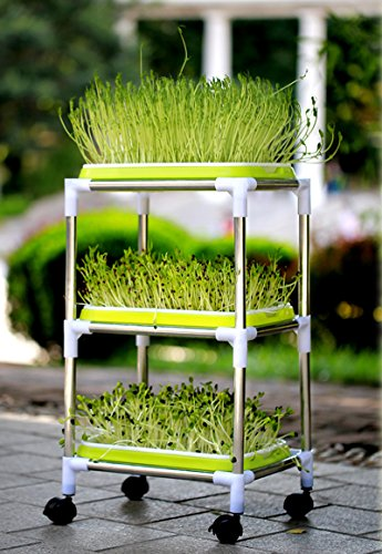 Soil-Free Wheatgrass Grower Sprouter Tray System 3 Layer
