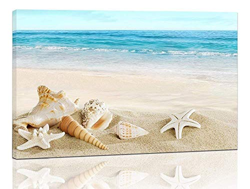 seashell pictures - 8