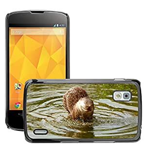 Hot Style Cell Phone PC Hard Case Cover // M00307930 Otter Wildlife Park Zoo Fluffy // LG Nexus 4 E960